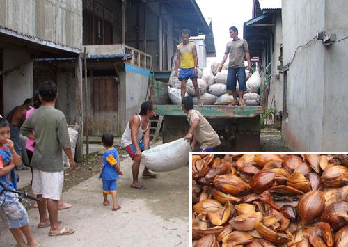 Tengkawang-Saecke werden verladen & getrocknete Nuesse