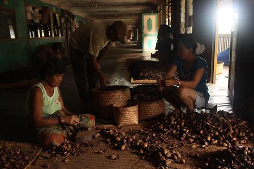 Getrocknete Nusse werden vom harten Pericarp befreit