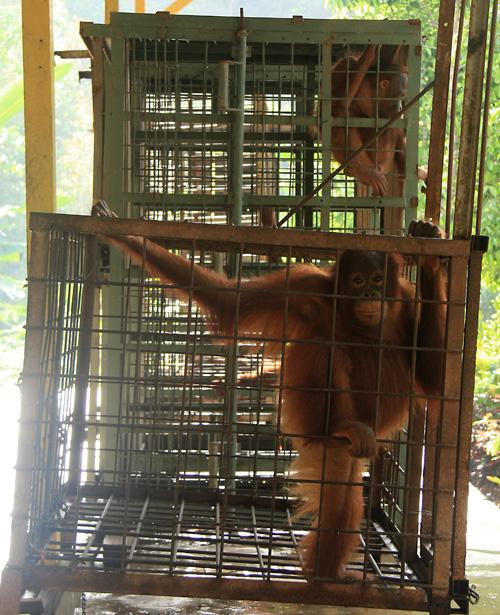 Profitgier, Mangel an Mitgefuehl, Ignoranz … ich weis nicht wie man sonst diese Art von Tierhaltung erklaeren kann.
