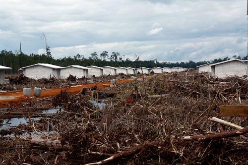Transmigranten-Siedlung und Waldreste vor dem Abbrennen