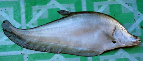 Kerupuk Basah aus Belida-Fisch ist besonders schmackhaft.