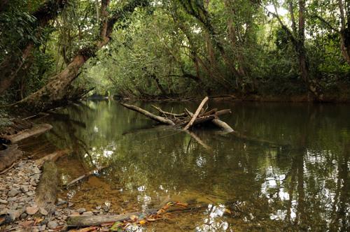 Klare Flusslaeufe – die ideale Abkuehlung und Erfrischung