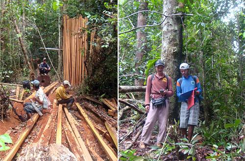 Holz ist eine wichtige Ressource für die Dayak. / Kartierung der Dorfgrenzen von Pulau Manak.