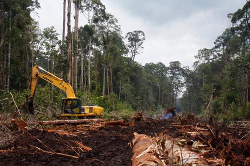 Die Anlange von Ölpalmplantagen, wie hier unweit von Putussibau, zerstört den Lebensraum der Wildtiere.