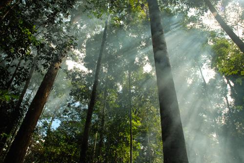 Abgelegene geschützte Primärwälder – In Kapuas Hulu gibt es sie noch. (Photo by Ngurah Pradnyana)