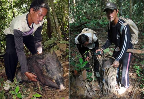 """Ein mit einer Schlingfalle gefangenes Schwein wird im """"Rucksack"""" ins Dorf gebracht."""