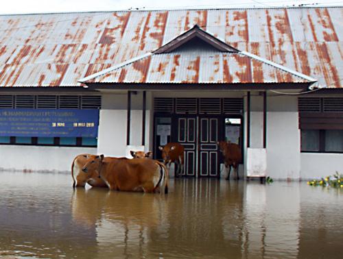 Kuehe suchen ihre Rettung vor der Schule.