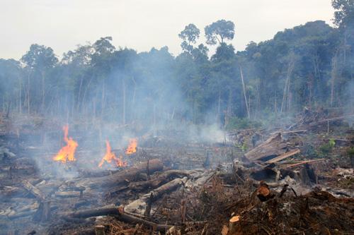 Brandrodungsfeldbau – Die Ladangflaeche wird fuer die Aussaat von Trockenreis abgebrannt.