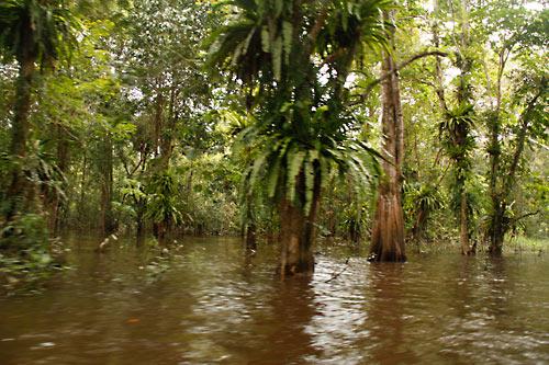 Ueberschwemmte Waldflaechen